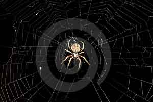 Chayat Hashavua: God's wisdom in creating spiders